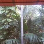 10 Stunden täglich genieße ich beim Yoga diesen Ausblick in die Palmen. Selbst die herabfallenden ,donnernden Kokosnüsse stören nicht mehr in der Meditation
