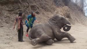 Unterwegs haben wir oft Elefanten in Ketten mit Sitz gesehen. Unter strenger Führung transportieren sie Touristen auf ihren Rücken. Hier war im Norden treffen wir alternative camps. Touristen können hier freiwillig arbeiten und / oder gegen Geld Elefanten kennen lernen und füttern z.B.